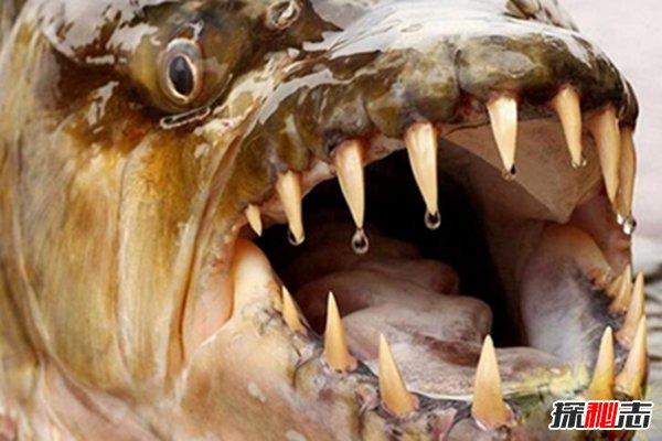 世界上最恐怖的鱼类排行榜图片资料:18张恐怖鱼类照片,看完后再也都不敢去钓鱼了