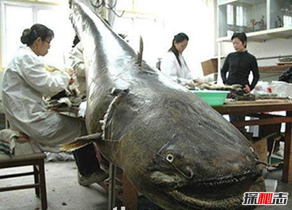 世界上最大最恐怖的鱼图片