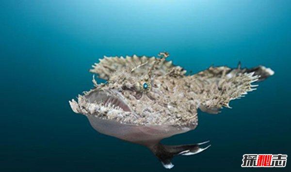 史上最恐怖的鱼类图片