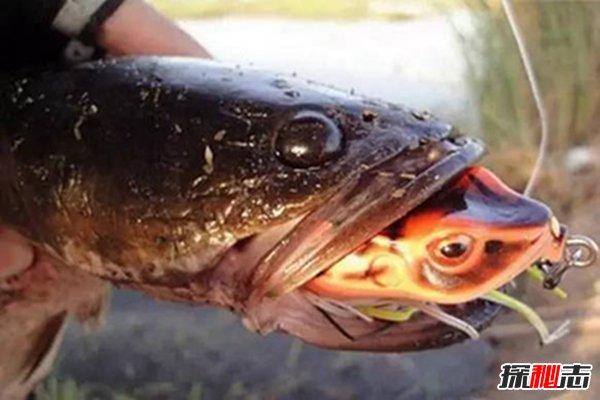 世界上最恐怖的鱼图片图片