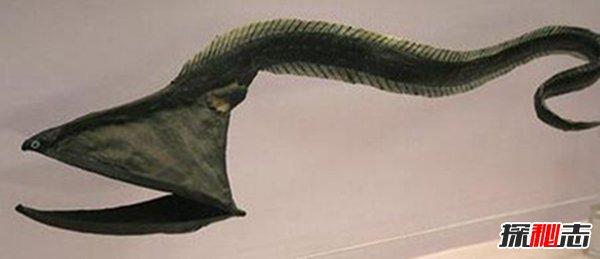 世界上最恐怖的十种鱼图片
