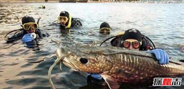 世界上最恐怖的十大鱼图片