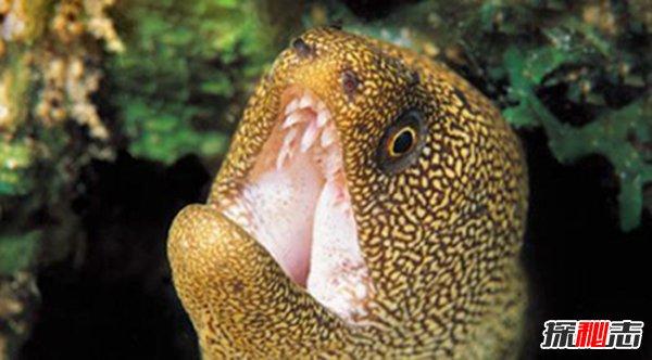 世界上最恐怖的鱼图片