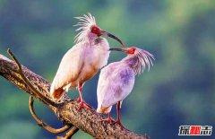 中国十大珍惜鸟类,第1端庄美腻第5中国独有(不超千只)