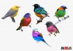 中国四大名鸟,第一声音动听第三价格最贵几十万一只