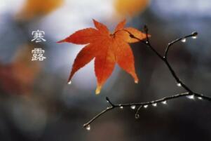 寒露节气的含义是什么,秋季时节的正式开始(每年的10月8-9日)