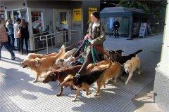 世界上最奇葩的高薪工作 狗粮品尝师需品尝狗粮让人诧异