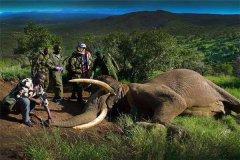世界上最大的象牙 重量达108.86公斤长达3.11米
