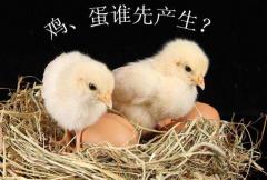 先有鸡还是先有蛋?两种答案,谜题揭晓(鸡的祖先是恐龙)