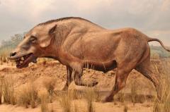 猪的祖先是谁?巨猪,6500万年前动物(脑容量比拳头小)