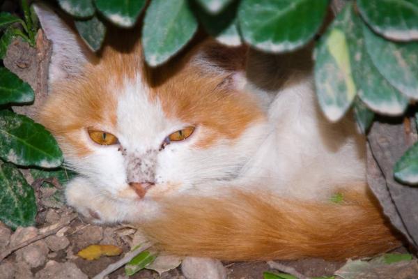世界上寿命最长的猫咪图片