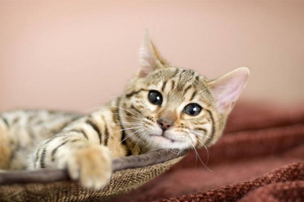 世界上寿命最长的猫活了多少年图片