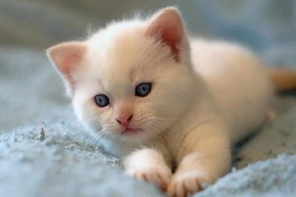 世界上寿命最长的猫是什么品种图片