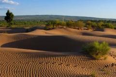 世界上第一个被消灭的沙漠:毛乌素,绿植93%(塞上绿洲)