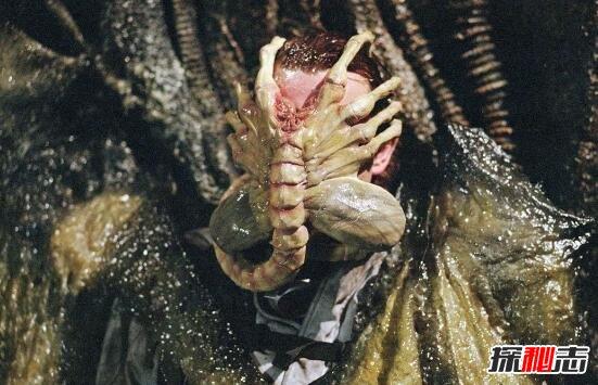 恐怖异形生物抱脸虫,口器插嘴将胚胎注入人体(超重口)
