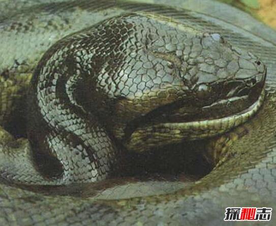 2014蛇渡劫化龙图片_2014年巨蛇渡劫化龙事件,被天雷狂劈灰飞烟灭_探秘志