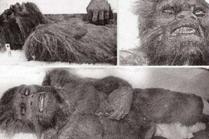 喜马拉雅山雪人之谜,已被证实是史前熊类(图片)
