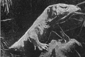 刚果开赛暴龙是真的吗,地球上最后的恐龙(疑是骗局)