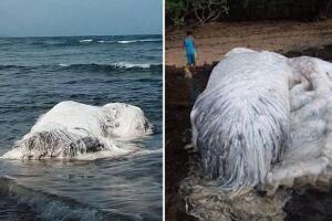 揭秘南非海怪真面目,白色长毛鱼其实是鲸鱼尸体
