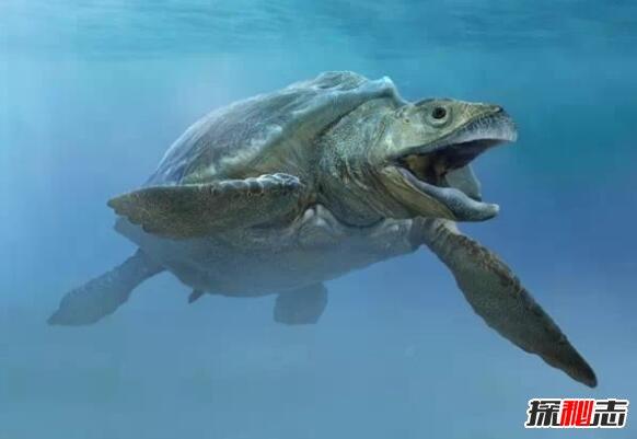 世界之最 > 正文     加拉帕戈斯象龟分布于南美洲加拉帕戈斯群岛的9