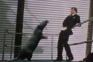 鬼城切尔诺贝利巨鼠事件,核辐射造就变异食人巨鼠(谣言)