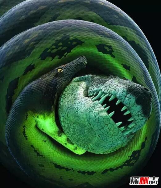 史前巨兽塞雷洪泰坦蟒,人类已知最大的蛇(长15米)