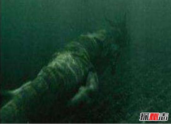 海底拍到12米的真龙图片