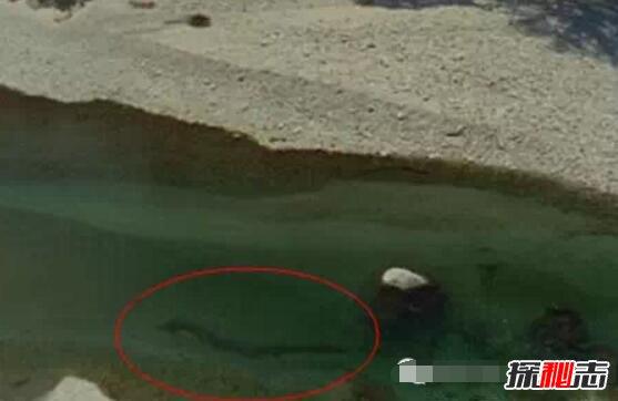 海底真的有巨型生物吗图片