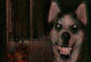 揭秘微笑狗是什么,看过Smile Dog的人都被吓疯了(慎点)