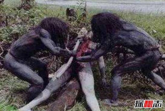 大王酸浆鱿拉丁美洲印第安人的一支)食人族