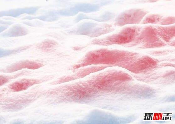 西瓜雪的危害图片