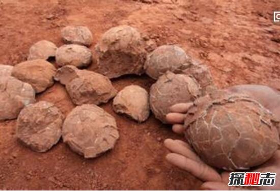恐龙世界2_惊动世界的恐龙蛋之谜,中国惊现5000枚亿万年前恐龙蛋