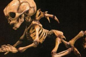 考古发现真实天使的残骸,脊部长有翅膀(婴儿天使)