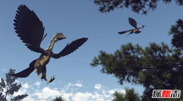 恐龙有没有羽毛?恐龙大规模灭绝的原因