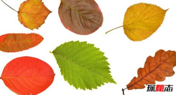 樹葉為什(shi)麼會(hui)改變顏色?樹葉變色的原因(yin)揭秘