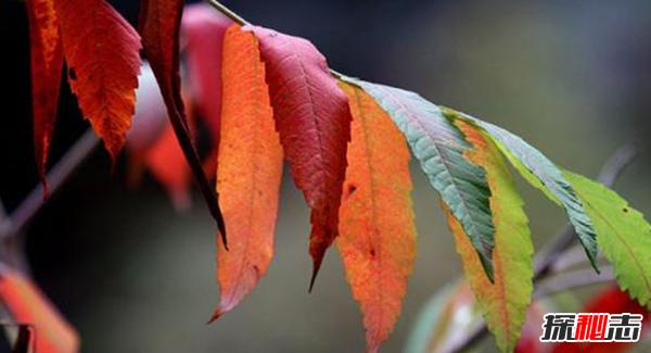 树叶为什么会改变颜色?树叶变色的原因揭秘