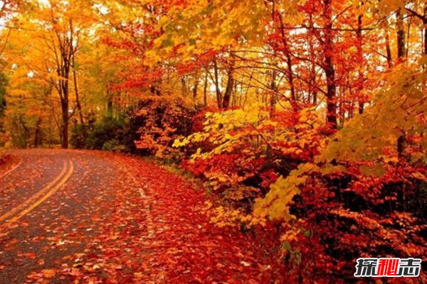 樹葉為什麼會改變顏色?樹葉變色的原因揭秘