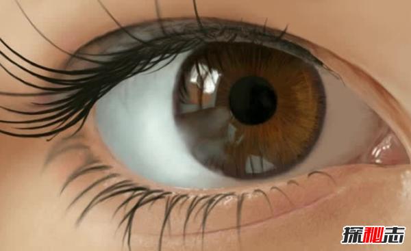 什么食品对眼睛好?保护眼睛的十大食物