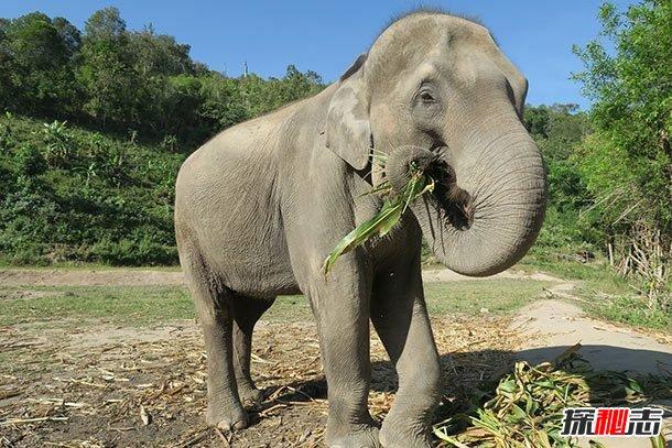 大象能听到地震?关于大象的12大有趣之处