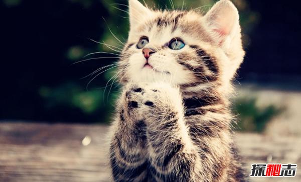 新手养猫15大基础知识:猫一生中70%时间都在睡觉