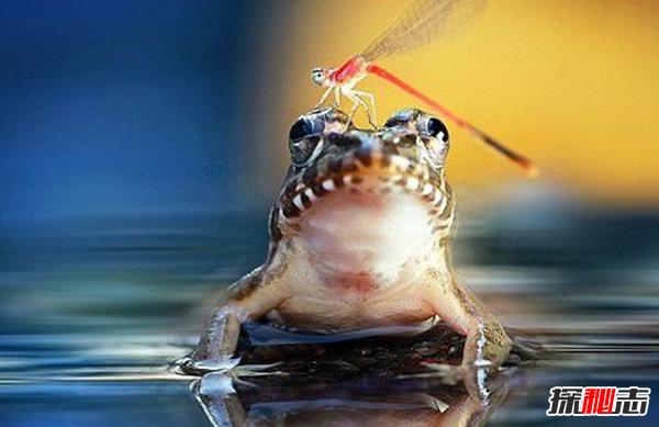 青蛙是怎么睡觉的?青蛙的十大特点和生活特征