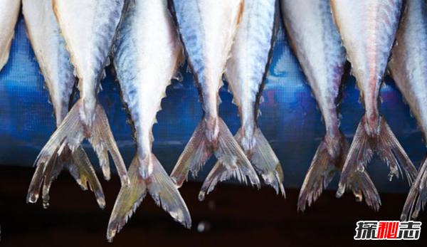 世界上十大吃鱼最多的国家 日本仅排第四,第一出乎意料