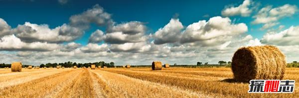农业为什么这么重要?农业的十大地位和作用