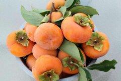 和柿子相克的食物是什么 食用柿子的禁忌有哪些