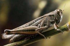 吃蚂蚱小菜一碟猜一生肖 同类的歇后语还有哪些