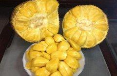 苹果与菠萝蜜同吃吗 菠萝蜜不能搭配的食物有哪些