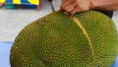 无花果可以和菠萝蜜一起吃吗 可以一起吃不会影响身体
