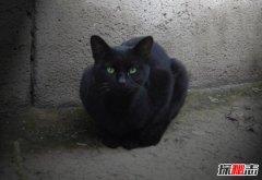 养猫的诡异禁忌,女人养猫阴气重影响风水(睡觉吸阳气)
