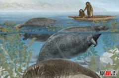 世界上灭绝最快的动物,从发现到灭绝只需27年(皮毛惹祸)