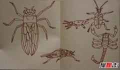 世界十大最毒昆虫,第一身边常见易危害生命(极不起眼)